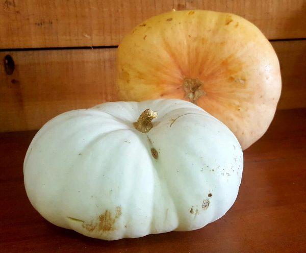 Pumpkin Slices per Kg